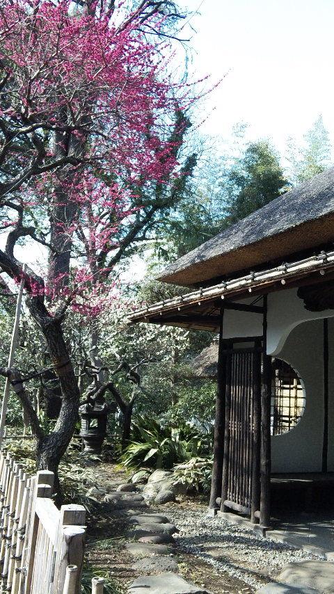 ueno-zoo-naiya (9)