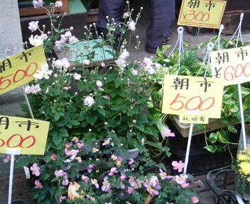midori-hikifune hana.jpg