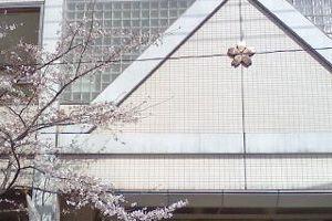080325sakura_04.jpg