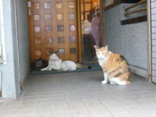 cat-kichijyoji.jpg