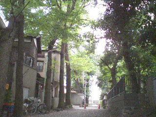 090705_ayumi_asagaya_yashikimori1.jpg