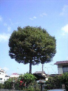 080820_yanagi.jpg
