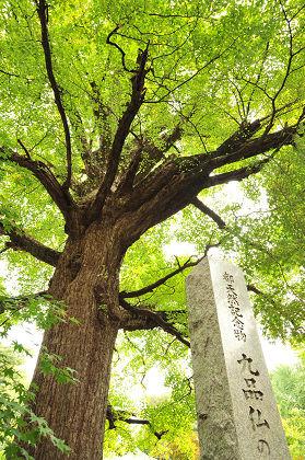 nikotama_kuhonnbutsu_02.JPG