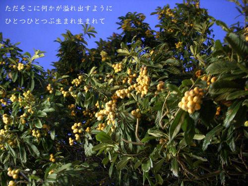 DSCN2930_ORI.jpg