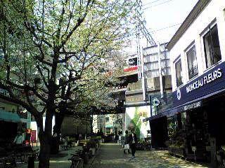 SAKURA2007a.jpg