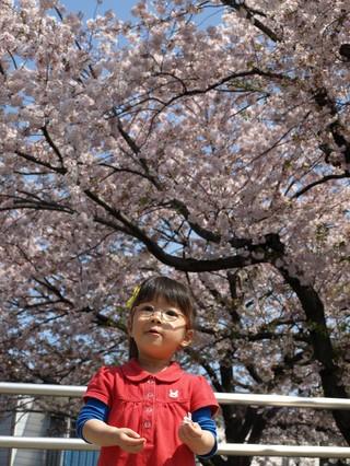 2010花見(ぱんだ公園)