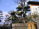 寺田屋の庭