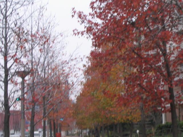 スズカケの並木