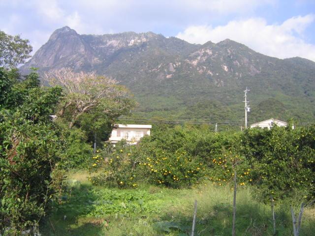 木富岳とたんかん