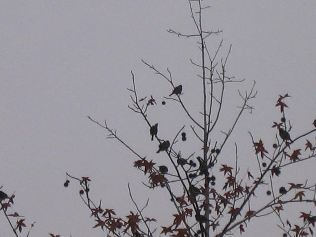 木の実と鳥