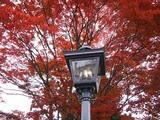 ランプと紅葉