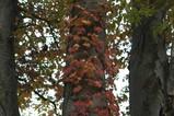 岩手公園の紅葉-1