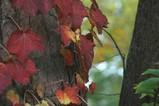 岩手公園の紅葉-2