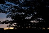 梢越しの夕日