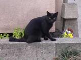住吉神社前の子猫