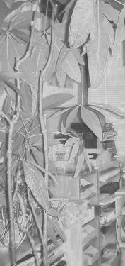 植物の標本B