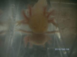 カエル 151
