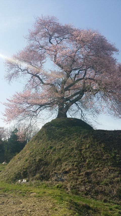 20_平堂壇の桜