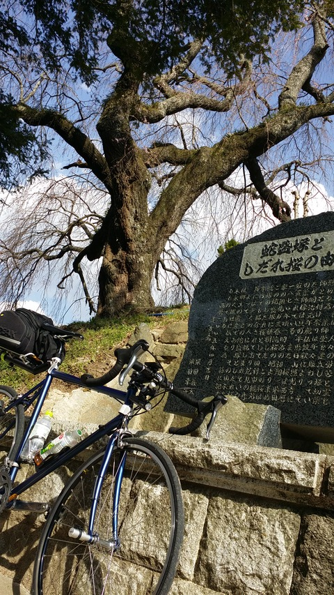 17_蛇盛塚の桜