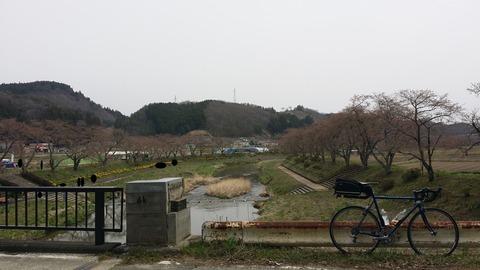 28_夏井千本桜
