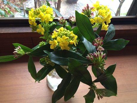 沈丁花 菜の花
