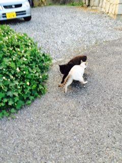 牛窓 猫 ご挨拶