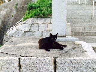 牛窓 猫 黒 一匹