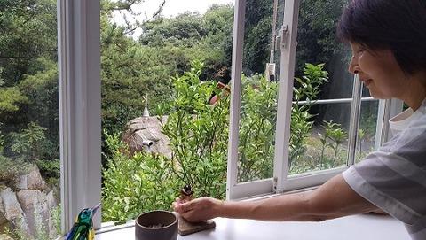 滝 山雀 マルタ