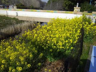 春の花と真夏の陽気
