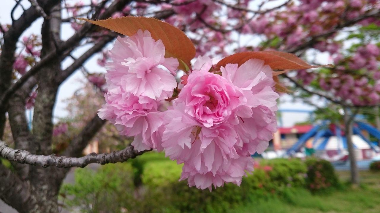 そぼくに咲いているあれをご紹介!!