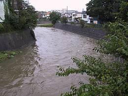 水位の上がった柳瀬川