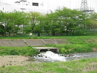 清瀬水再生センターから出てくる水