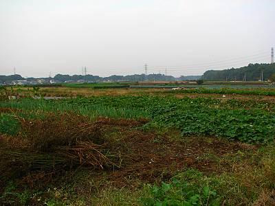 下富地区の畑