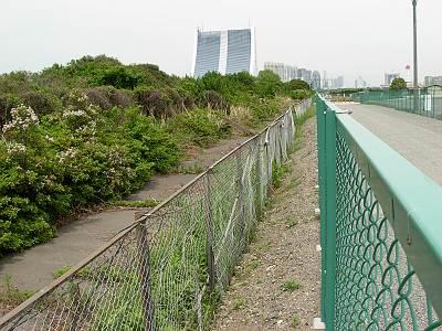 湾岸線東京港トンネル入口の側道