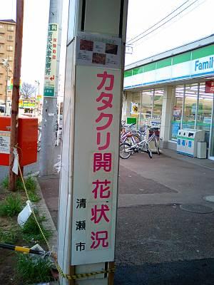 清瀬市カタクリ開花状況