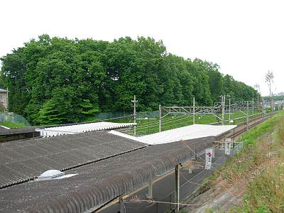 西国分寺駅上から見た姿見の池緑地保全地域