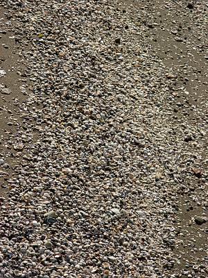 京浜運河の砂浜には貝殻がいっぱい