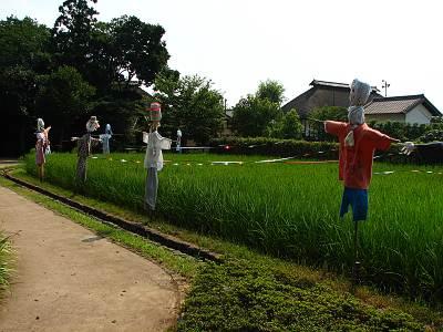 難波田城公園 水田
