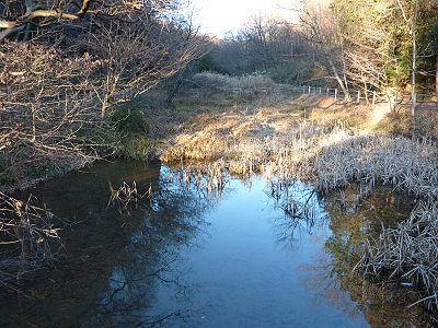 六地蔵近くの湿地