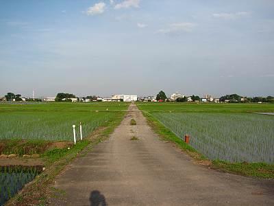 6月の富士見市田んぼ1