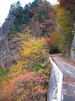 林道広河原逆川線の紅葉その2