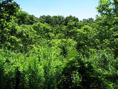 所沢カルチャーパーク横のジャングル