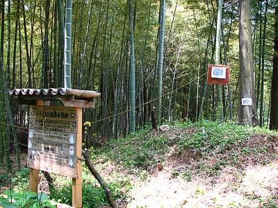 トトロの森4号地