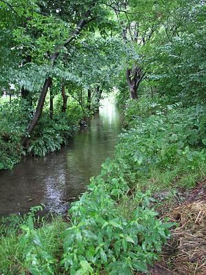 矢川緑地保全地域