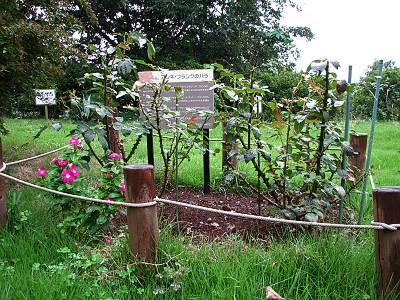 瑞穂町 平和記念碑にあるアンネのバラ