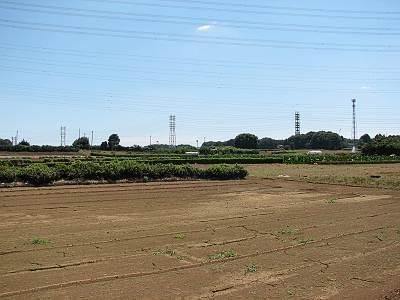 狭山市 堀兼の井戸周辺の畑