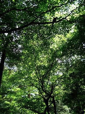 森の上からの視線