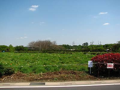 所沢市のお花畑周辺は駐車禁止