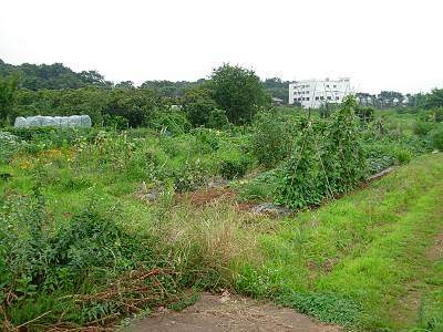 日比田調節池予定地の農作物