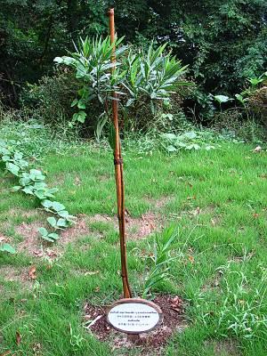 瑞穂町 平和記念碑にあるタイ王国児童による記念植樹